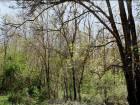Altınova da fırsat satılık bahçe