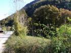 Kurtköy de yatırımlık bahjçe
