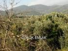 Orhangazi'de Satılık Zeytinlik