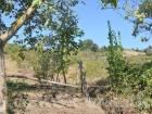 Ortaburunda Satılık Tarım Arazisi
